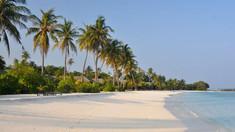 Turismul și urbanizarea conduc la dispariția masivă a insectelor pe insulele tropicale (studiu)