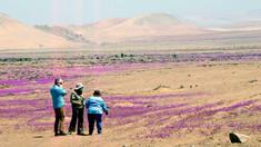 Unul dintre cele mai aride deșerturi din lume a înflorit odată cu sosirea primăverii australe