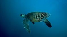 Sute de broaște țestoase moarte au fost aduse de valuri la mal în Mexic